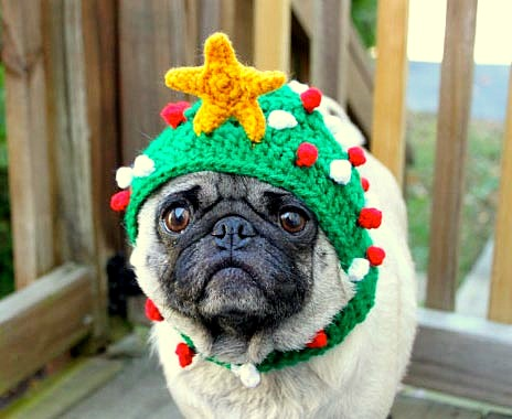 2.26.15 - Dogs Who Are NOT Happy About Their Hats8