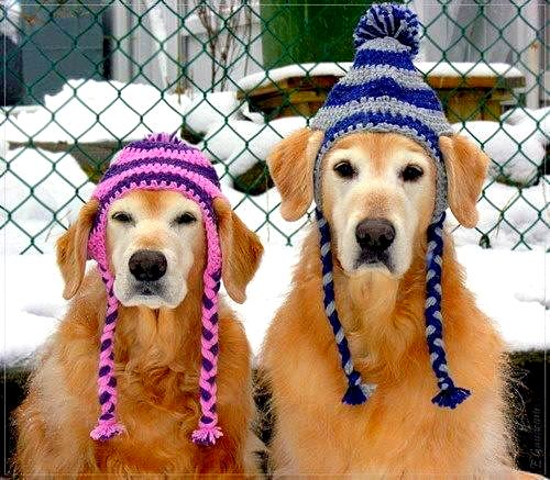 2.26.15 - Dogs Who Are NOT Happy About Their Hats9