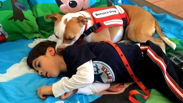 2.26.15 - Service Pit Bull Wins the Right to Attend Boy's School1