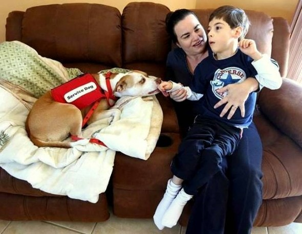 2.26.15 - Service Pit Bull Wins the Right to Attend Boy's School2