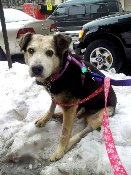 2.27.15 - Dog Who Spent 10 Years Living in NYC Park Has a Forever Home3