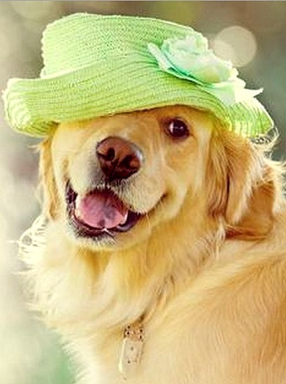 2.27.15 - Dogs Who Are LOVING Their New Hats10
