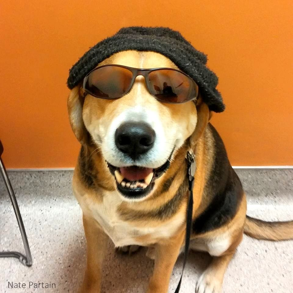 dogs hats hat dog thrilled