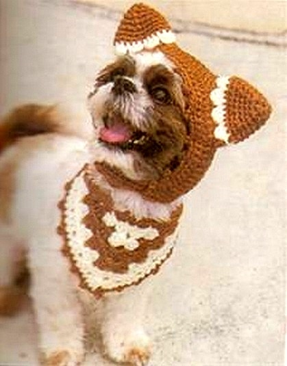 2.27.15 - Dogs Who Are LOVING Their New Hats7
