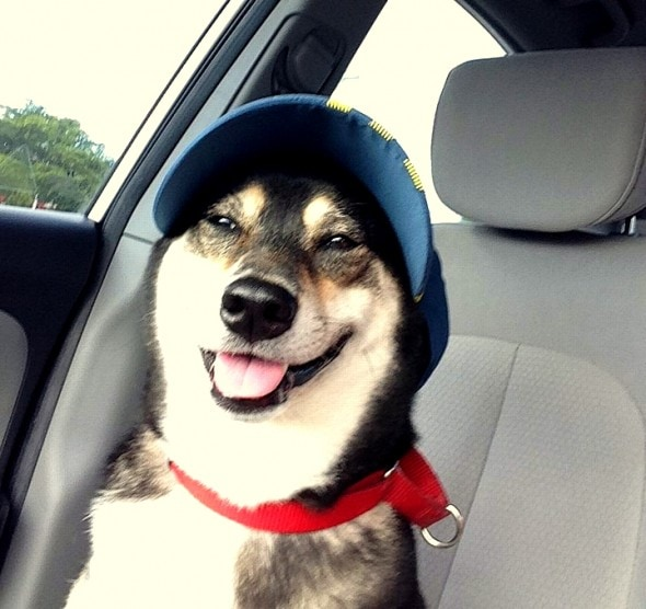 2.27.15 - Dogs Who Are LOVING Their New Hats9