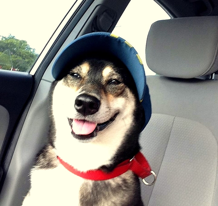 Dogs Who Are Thrilled With Their New Hats