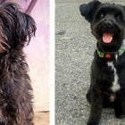 Before and After Photos:  Shelter Dogs Get New Lives