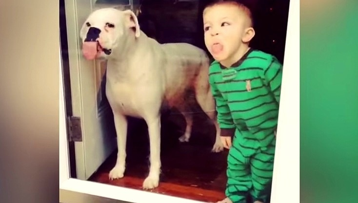 Dog & Boy's Window Cleaning Service