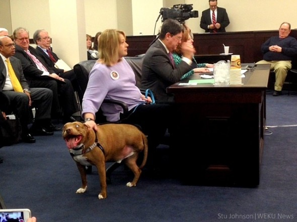 2.4.15 - Kentucky to Strengthen Dog-Fighting Laws1