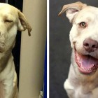 Dog with Embedded Choke Collar Gets a Rescue and a Home