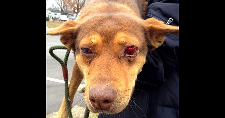 Terrified Dog Shot in the Face Finally Rescued
