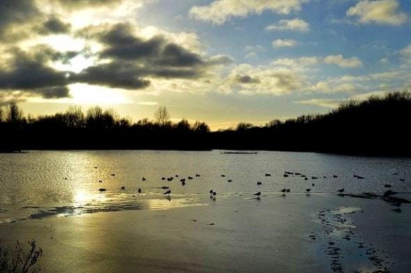 2.5.15 - Heroic Man Dives in Icy Lake to Save Stranger's Dog2