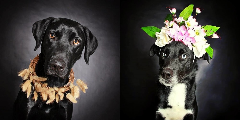 Bright Flowers Are Helping These Dogs Get Adopted