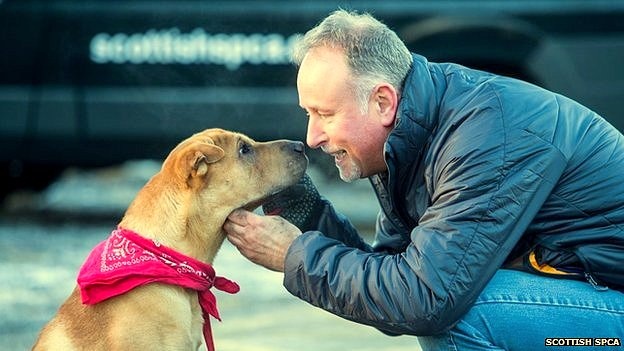Dog Abandoned at Scotland Train Station Gets Adopted