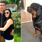 Adopted Rottweiler Saves Pregnant Woman from Knife Attack