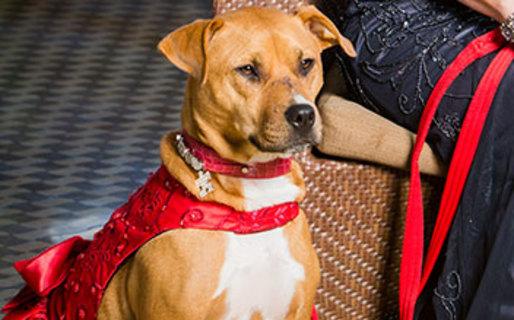 American Humane Association Opens Hero Dog Nominations