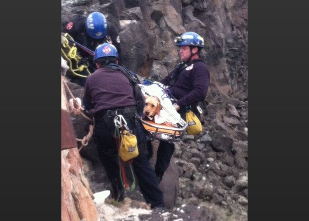 Dog That Fell 30 Feet Down Jagged Canyon Wall Gets Rescued