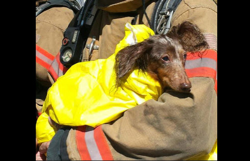 Fort Myers Firefighters Pull Dachshund from Burning Apartment