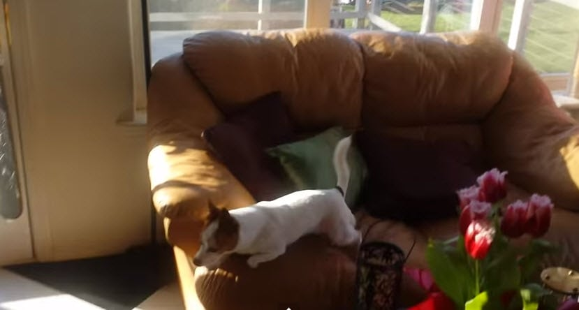 Dog Goes Crazy for Squirrel