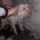 Hope for Paws Rescues Homeless Dog from Sewer Tunnel