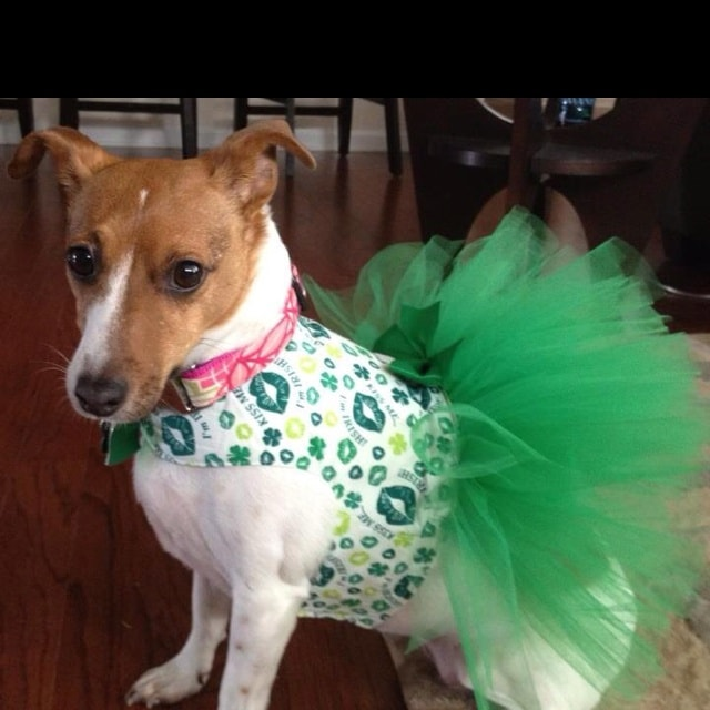 Dogs Get Festive for Saint Patrick's Day