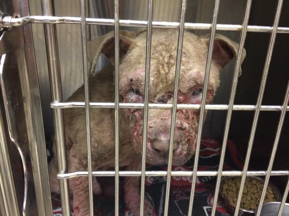 Facebook Post Saves Almost Blind Dog