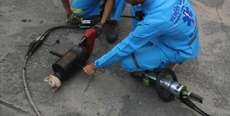 Thailand Rescuers Free Puppy from Exhaust Pipe