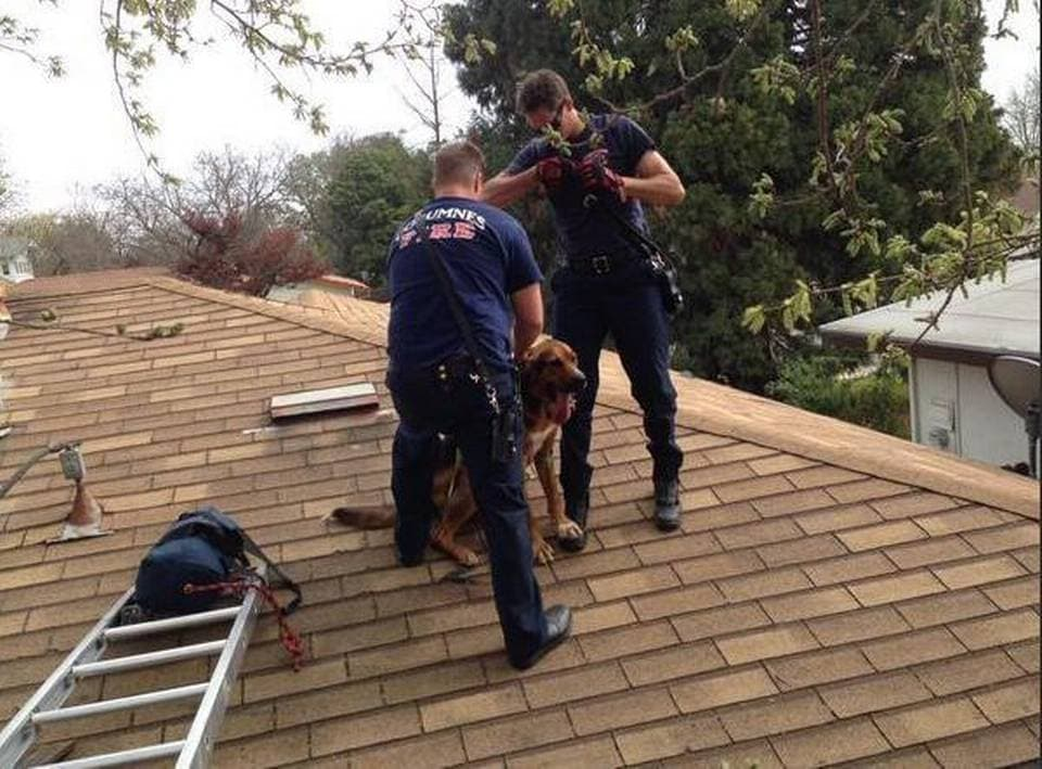 Leaping Dog Gets Stuck on Roof