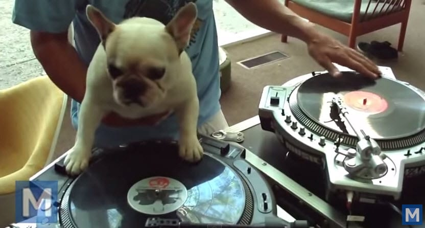 This Dog Can DJ Your Next Party