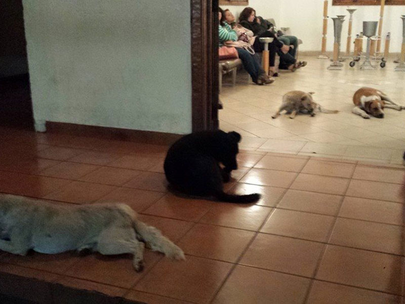 Stray Dogs Attend Funeral of Woman Who Fed Them