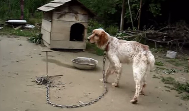 Rescuing a Tethered Dog Left to Die