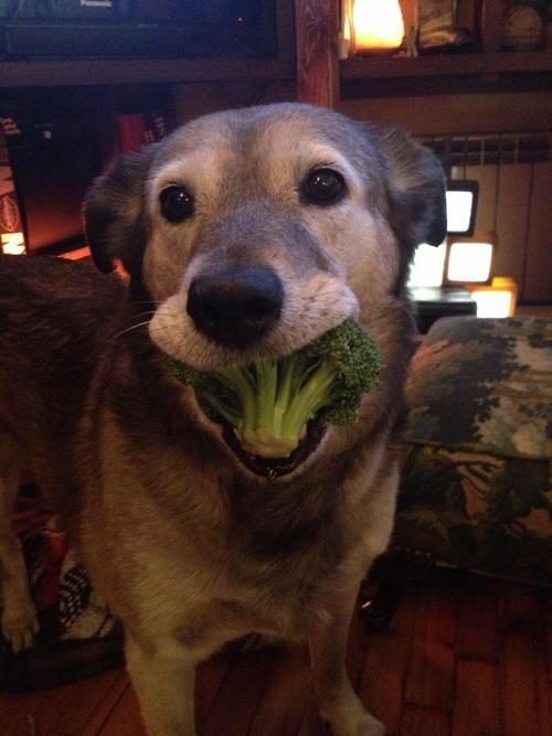 Here Are 10 Dogs Looking Goofy While Eating