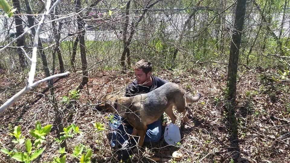 Dog Walks out of Woods Five Days After Car Crash