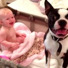 Boston Terrier Won't Get Out of Baby's Crib
