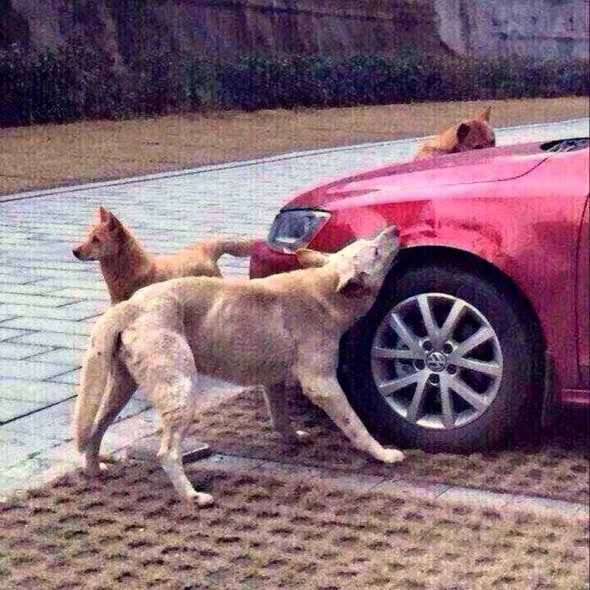 3.11.15 - Dog Kicked by Man Gets His Revenge1