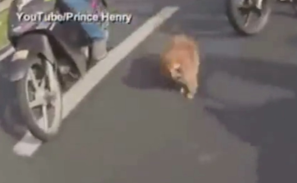 3.11.15 - dog rescued by bikers