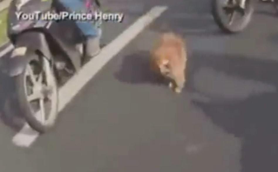 Bikers make Roadblock to get Scared Dog off Highway