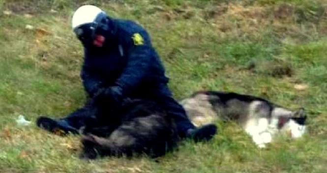 Kansas City Officer Comforts Cold, Lost Dogs Until Help Arrives