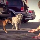 Beautiful Story of Two Strays Rescued Together