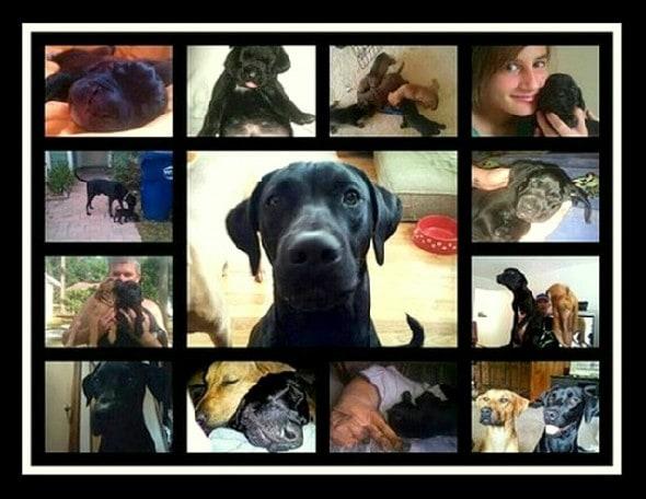3.18.15 - Family of Slain Dog Arfee Awarded $80,000 3