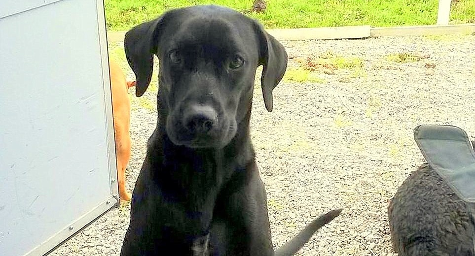 Family of Slain Dog Arfee Awarded $80,000