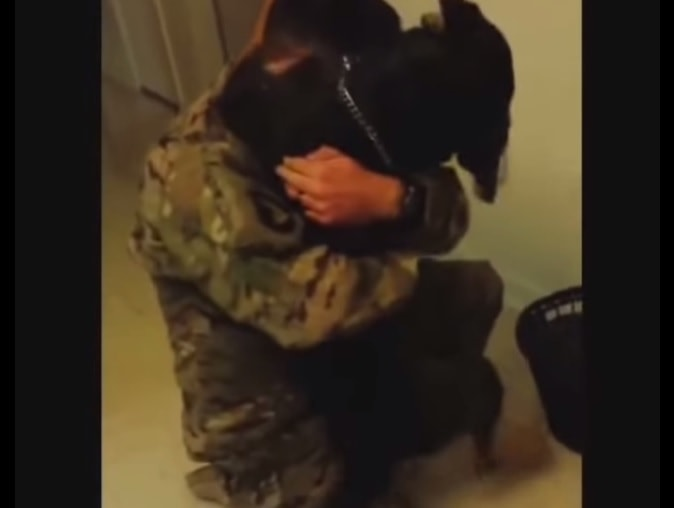 Dogs Welcoming Home their Military Humans
