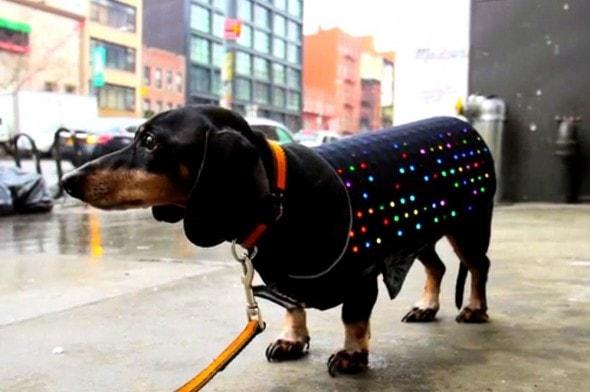 3.19.15 - Disco Dog1