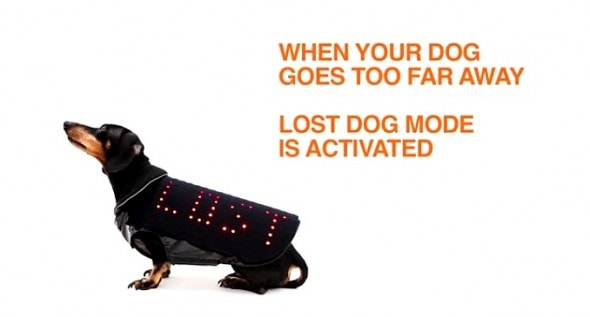 3.19.15 - Disco Dog2