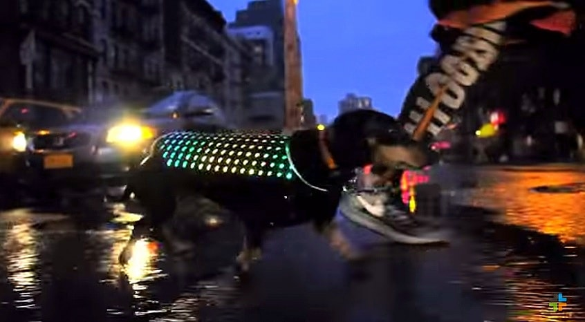 LED Vest Will Make Your Dog Look like a Disco Ball