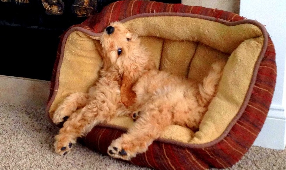 Dogs Who Totally Forgot How to Bed