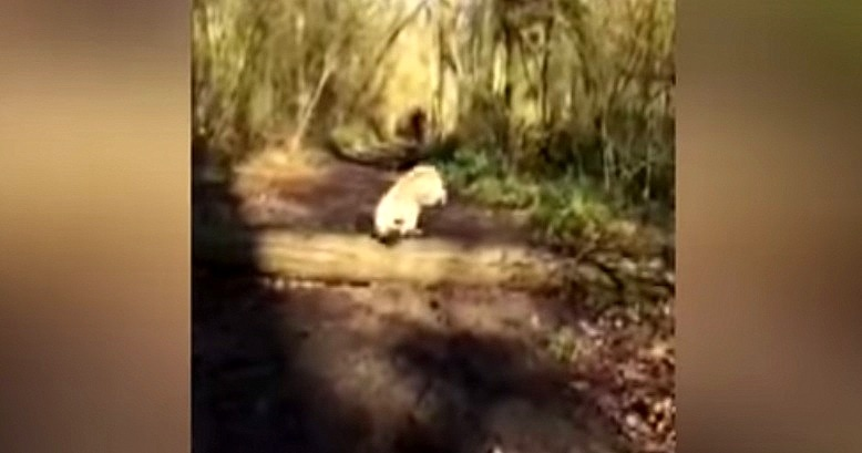 Whoopsie!  Poor Pug Badly Miscalculates Jump