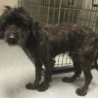 Dog Victims in Tennessee Hoarding Case up for Adoption