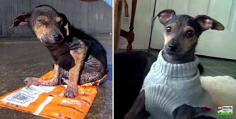 The Recovery of This Abandoned Puppy Will Leave You Speechless