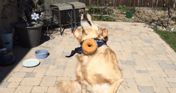 3.24.15 - doughnutFAIL
